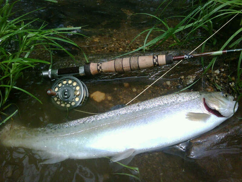 "Nice Rainbow Trout on a Smith & Albury 6""6"" 2wt fly rod, caught by John Ralls."